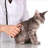 Ветеринарные клиники в Гурьевске